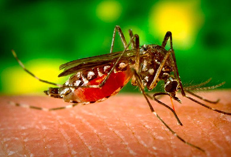 Ficar em casa é ótima oportunidade para reforçar cuidados contra Aedes aegypti