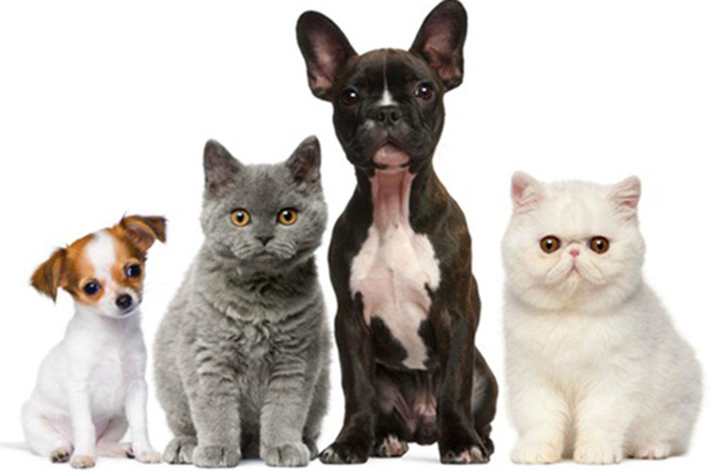 Vacinação contra raiva em cães e gatos começa nesta quarta-feira (25) em Várzea Paulista